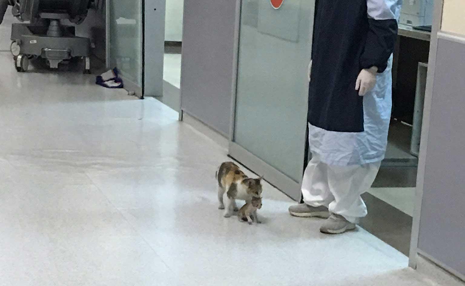 بلی اپنے بیمار بچے کو لے کر ہسپتال پہنچ گئی