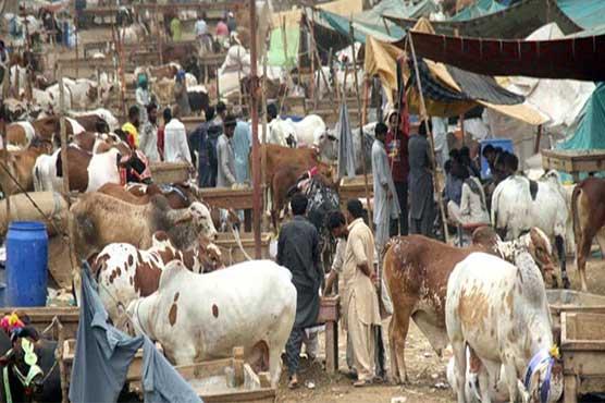 غیر قانونی مویشی منڈیوں کیخلاف کریک ڈاؤن کا فیصلہ، این سی او سی کا ضابطہ اخلاق جاری