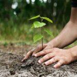 وفاقی حکومت کاملک بھر میں آج قومی مہم کے تحت 35 لاکھ پودے لگانے کا ریکارڈ قائم کرنے کا اعلان