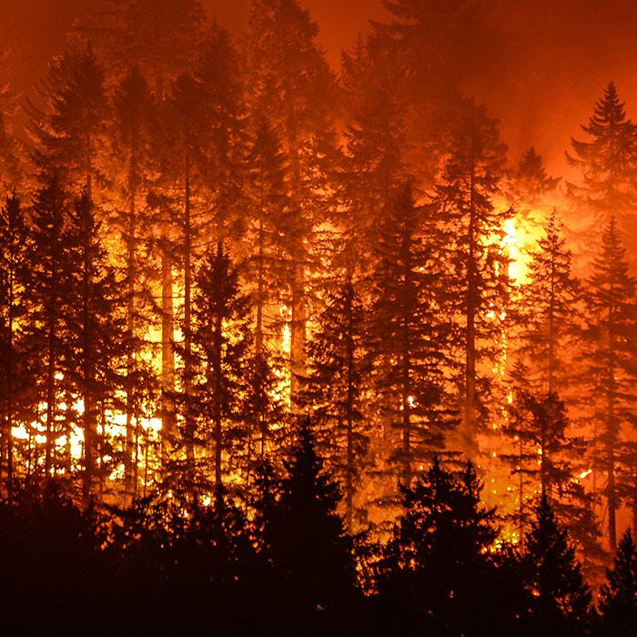 امریکا کے جنگلات میں لگی آگ پر قابو نہ پایا جاسکا