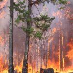 امریکا: کولوراڈو کوتاریخ کی سب سے بڑی آگ کا سامنا