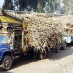 پنجاب حکومت کا رواں سال گنے کی قیمت 200 روپے فی من رکھنے کا اعلان