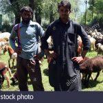 گجر بکر وال کشمیری مسلمانوں کو گھروں اور زمین سے بے دخلی کے نوٹس