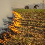 بھارت میں کسانوں کا احتجاج چوتھے ماہ میں داخل، فصلیں تلف کرنی شروع کر دیں