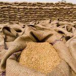 سندھ حکومت کا گوداموں میں گندم خراب ہونے کا اعتراف