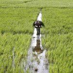 حکومت کسانوں کے مطالبات مان لے وگرنہ زرعی اور ملکی معیشت تباہ ہو جائے گی ۔کسان بورڈ پاکستان